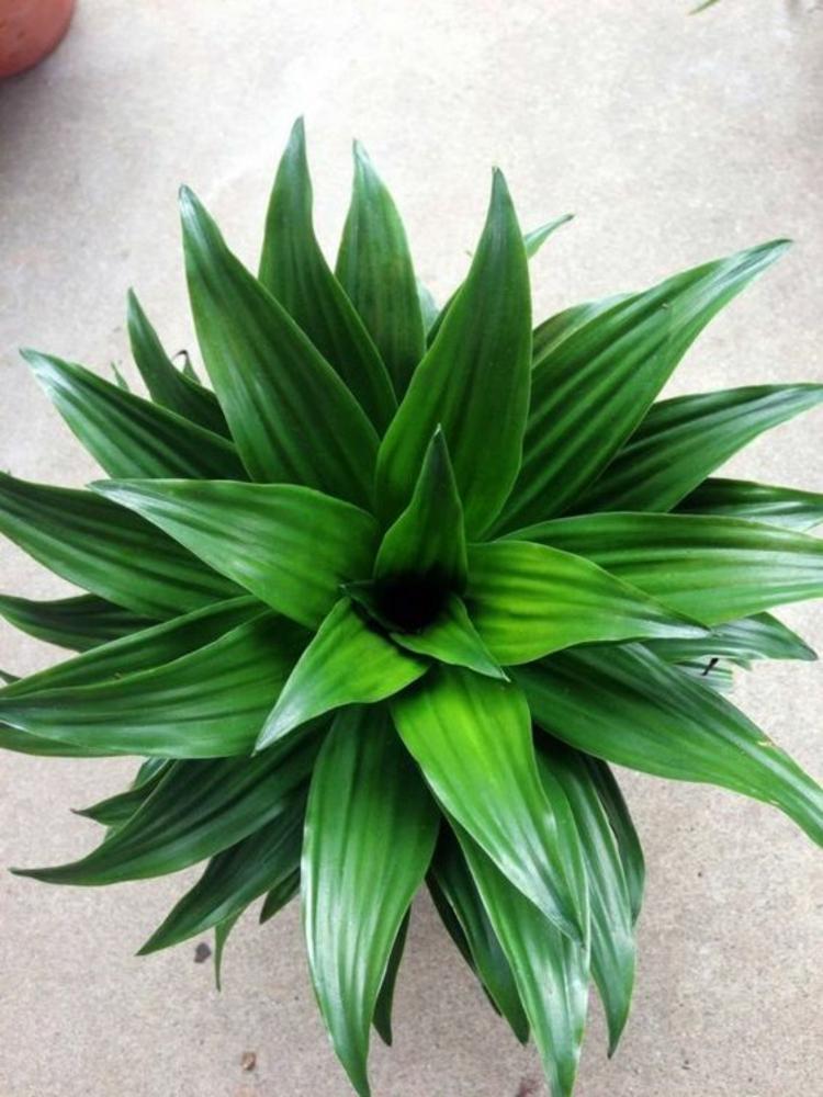 feng shui pflanzen ber die schutz und komfortfunktion der zimmerpflanzen. Black Bedroom Furniture Sets. Home Design Ideas