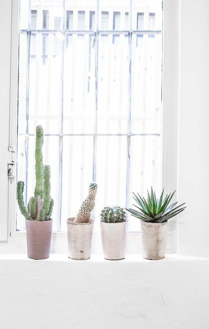 Sukkulenten Pflege Gartenpflanzen pflegeleicht Fensterdekoration