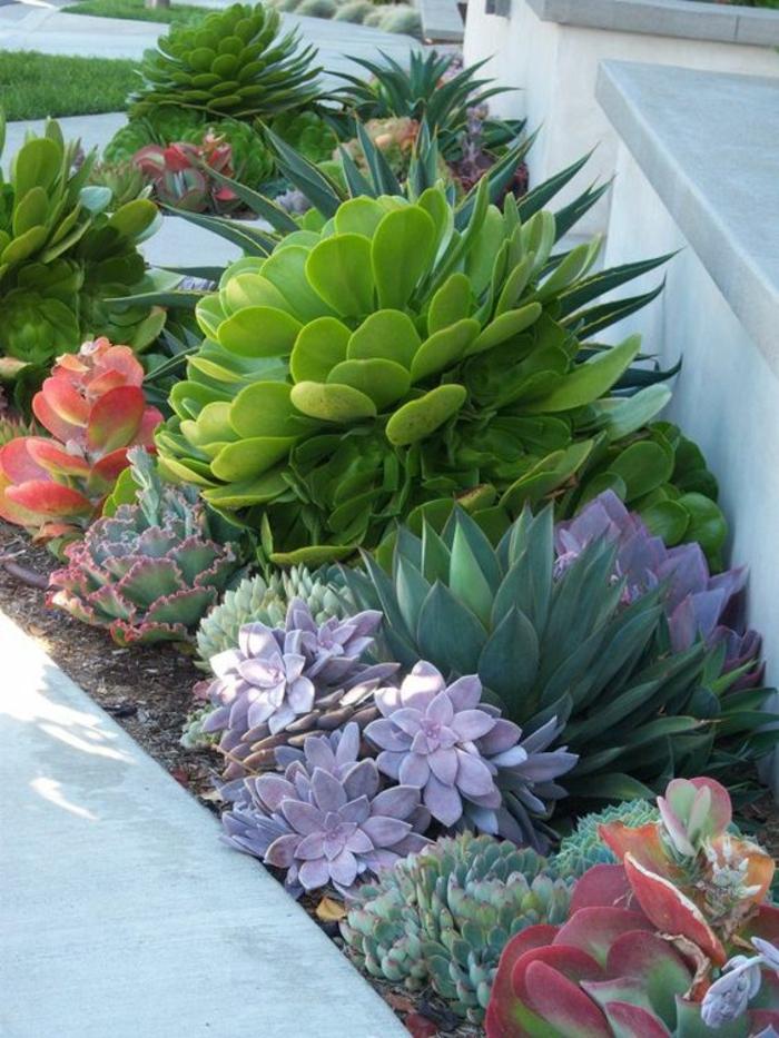 Sukkulenten pflege wie pflegeleicht sind sukkulenten eigentlich - Pflegeleichte gartenpflanzen ...