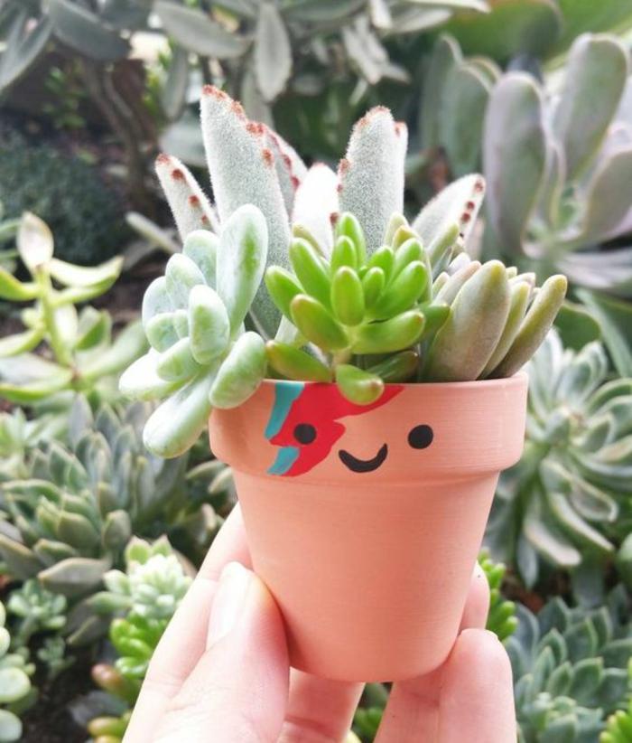 Sukkulenten Pflege Gartenpflanzen pflegeleich kreative Gartenideen