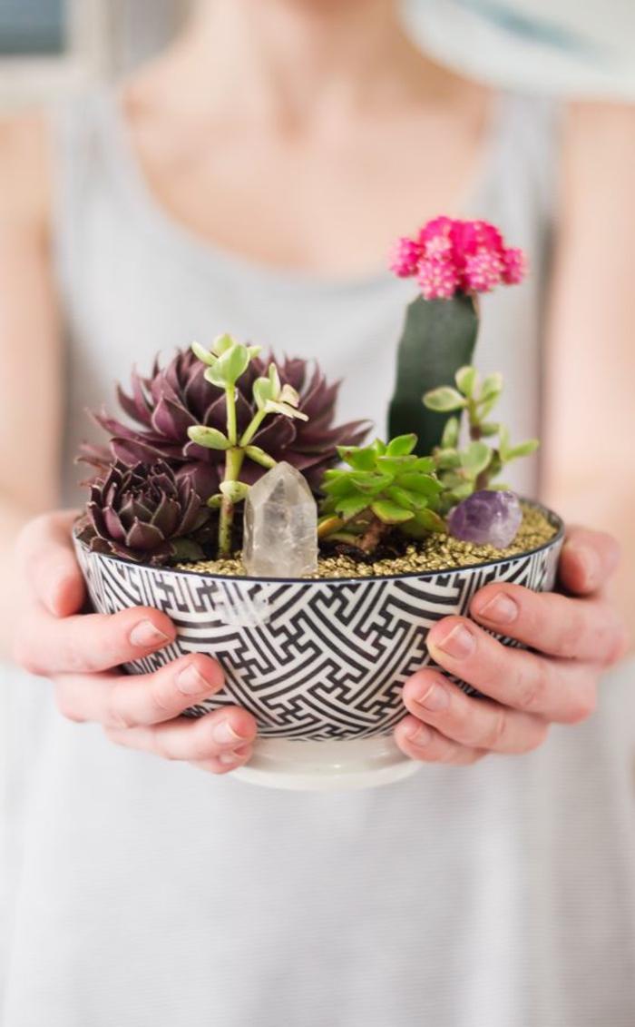 Sukkulenten Pflege Zimmerpflanzen pflegeleicht Gartenideen