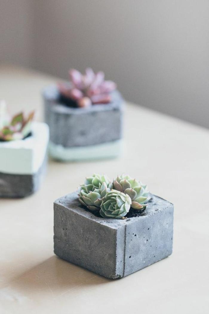 Sukkulenten Pflege Zimmerpflanzen pflegeleicht Pflanzentöpfe Beton