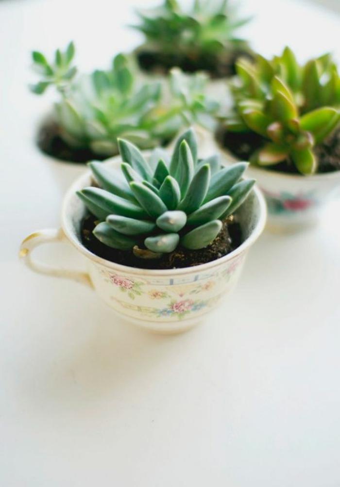 Sukkulenten Pflege Zimmerpflanzen pflegeleicht Tassen