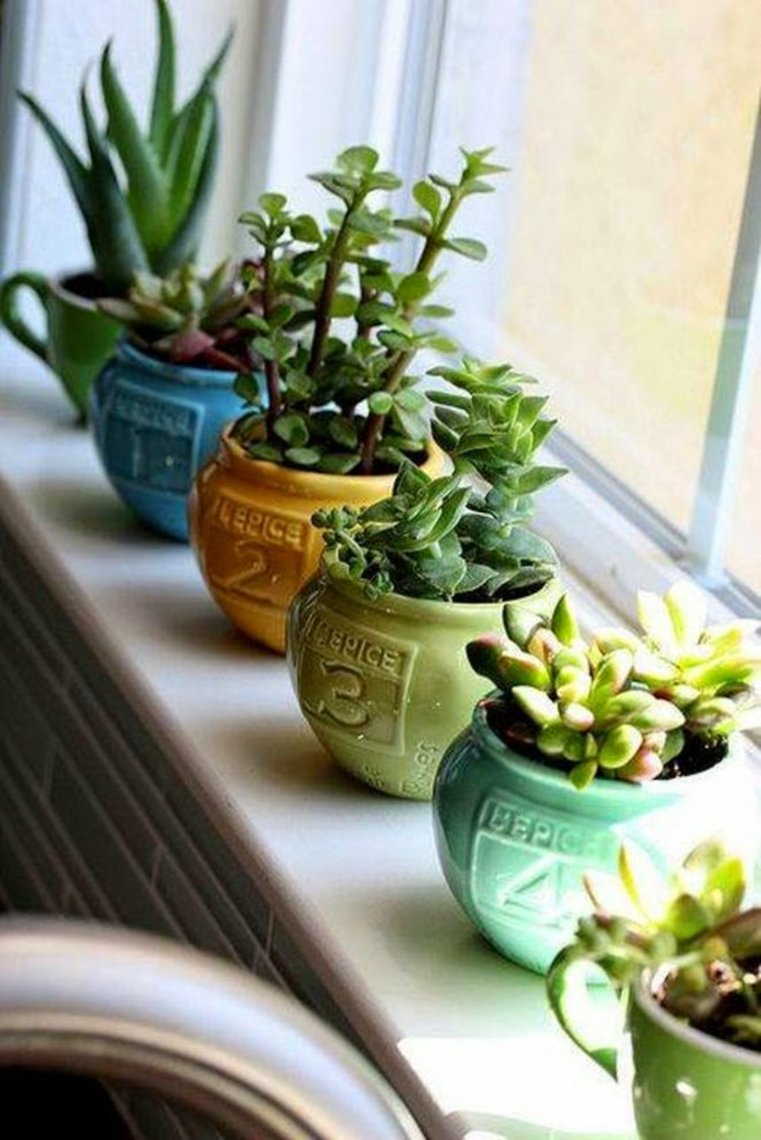 Sukkulenten Pflege fenster deko ideen Gartenpflanzen pflegeleicht