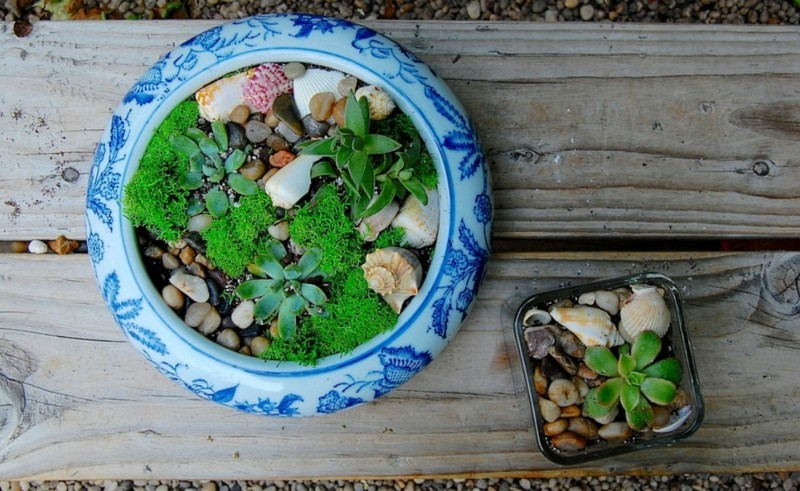 Sukkulenten Zimmerpflanzen pflegeleicht lebendige Deko Ideen
