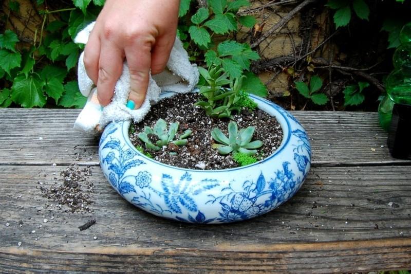 Sukkulente einpflanzen Deko Ideen zum Selbermachen