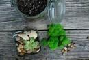 Sukkulenten-lebendige-Deko-Ideen-pflegeleichte-Pflanzen