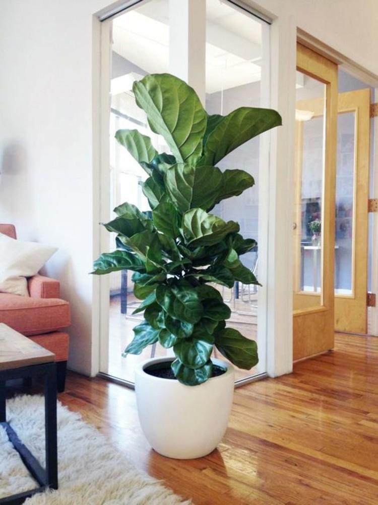 Wohnungseinrichtung Ideen Große Zimmerpflanzen