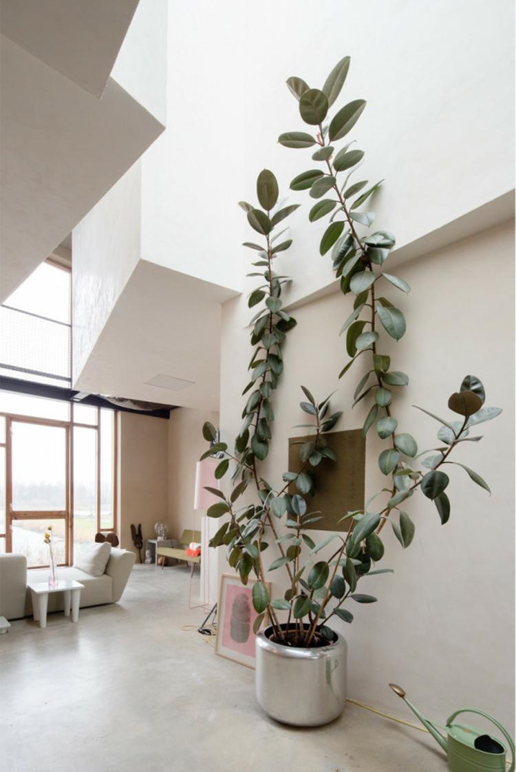Wohnungseinrichtung Ideen Topfpflanze pflegeleichte Zimmerpflanzen