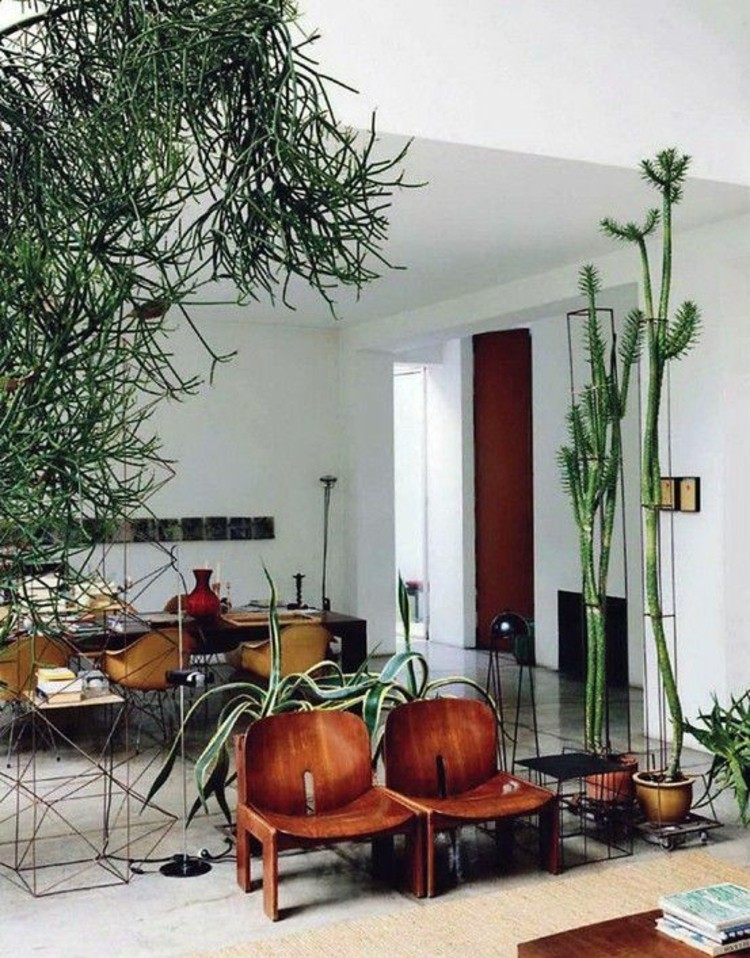 Wohnungseinrichtung Ideen Topfpflanze raumhohe Zimmerpflanzen
