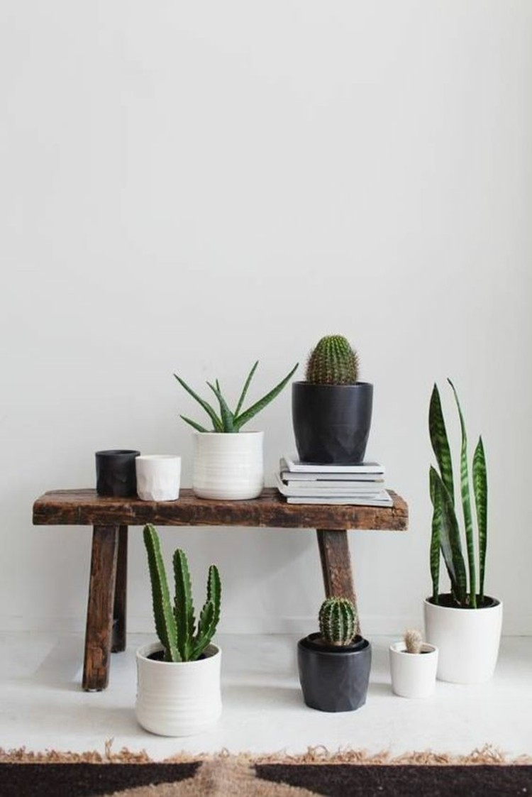 Wohnungseinrichtung Ideen Topfpflanzen pflegeleicht Deko Ideen