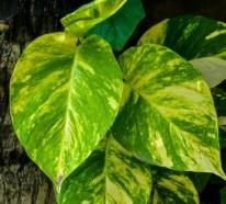 Welche Feng Shui Pflanzen sollten Sie laut Feng Shui im Haus und Garten haben