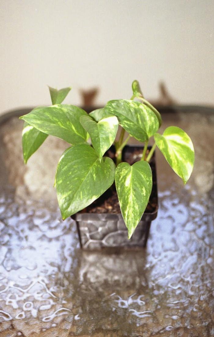 Feng Shui Pflanzen welche feng shui pflanzen sollten sie laut feng shui im haus und