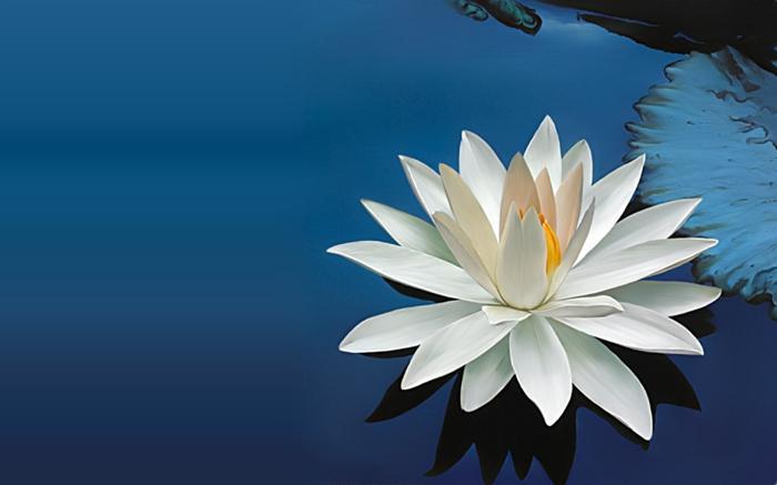 feng shui pflanzen inneneinrichtung dekoideen lotusblume