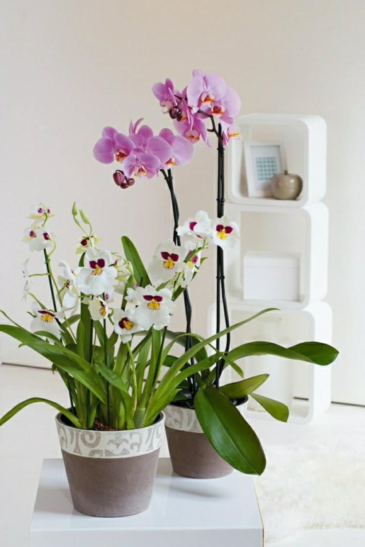 feng shui zimmerpflanzen orchideen topfpflanzen