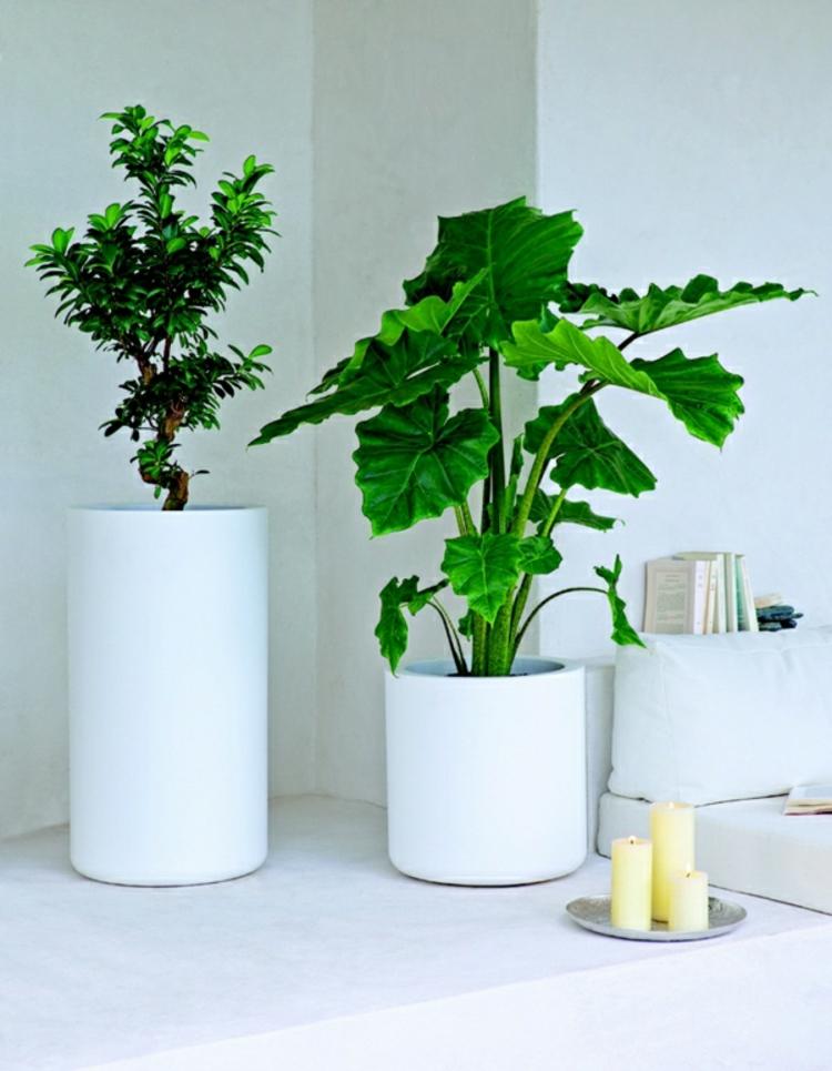 feng shui pflanzen: Über die schutz- und komfortfunktion der ... - Wohnideen Von Feng Shui