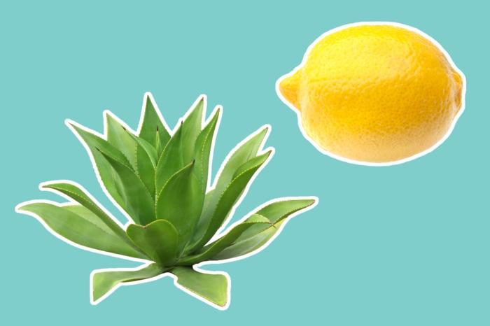 gesunde haut hausmittel für schöne haut bekommen reine haut tipps gesicht natur schutz verjungung