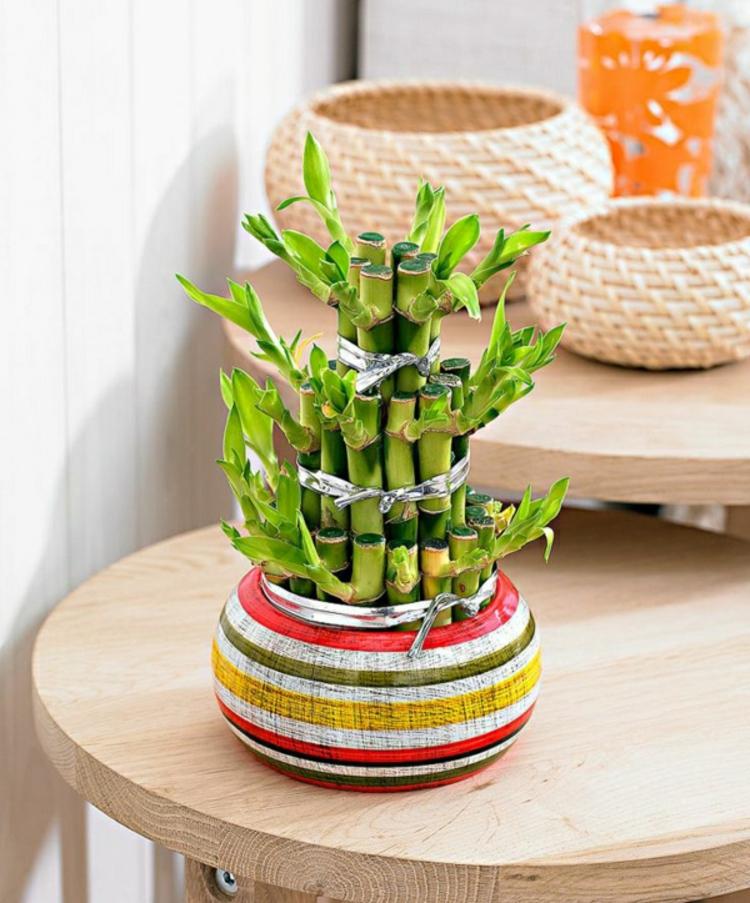 glücksbambus zimmerpflanzen blumentopf vase asien bunt