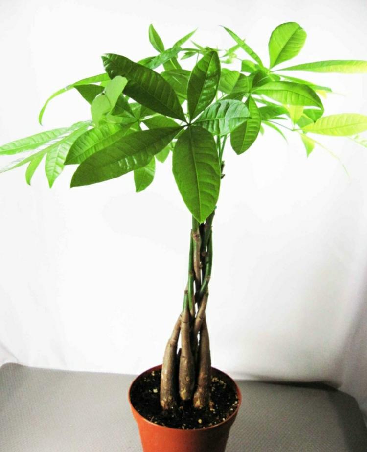 Grünpflanzen Green Plants Zimmerpflanzen: Feng Shui Pflanzen: Über Die Schutz- Und Komfortfunktion