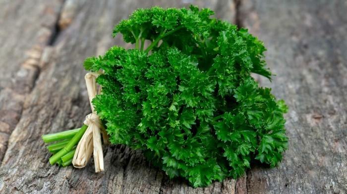 heilkräuter kaufen heilpflanzen gewürz lebe gesund kräuter pflanzen petersilie