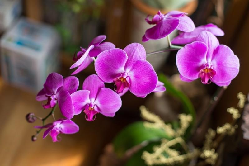 pflegeleichte Zimmerpflanzen Orchidee Hauspflanzen