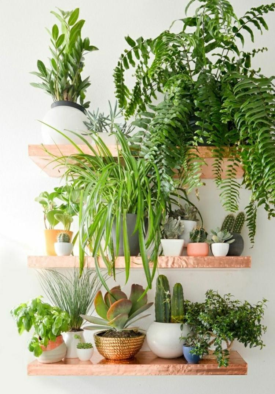 schöne Zimmerpflanzen pflegeleicht offene Wandregale Grünpflanzen