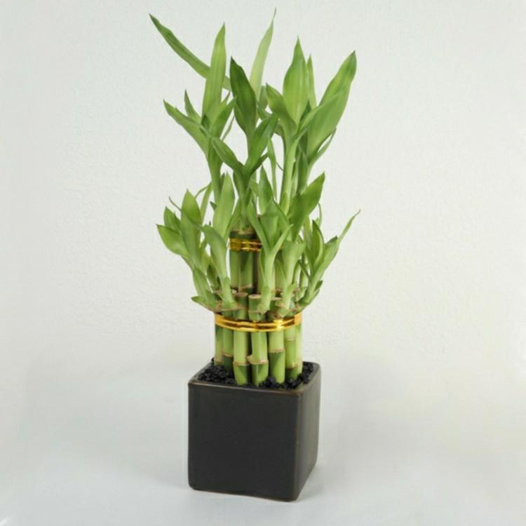 feng shui pflanzen ber die schutz und komfortfunktion