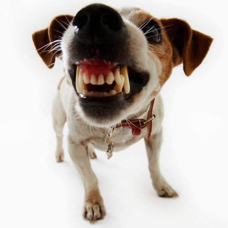 Angst vor Hunden Haustiere Hunderassen Phobie