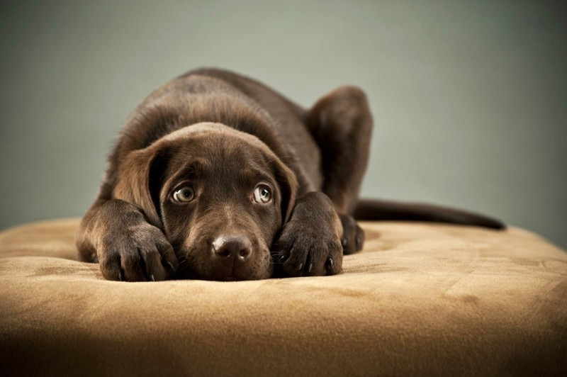 Angst vor Hunden Haustiere Hunderassen böse Hunde