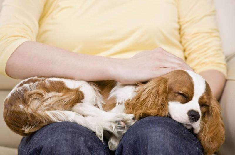 Angst vor Hunden Haustiere Hunderassen bester Freund