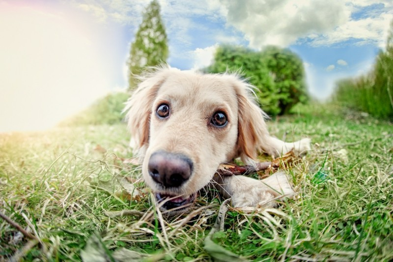 Angst vor Hunden Haustiere Hunderassen Hund auf der Wiese