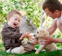 Haben Sie Angst vor Hunden und wie können Sie diese überwinden?