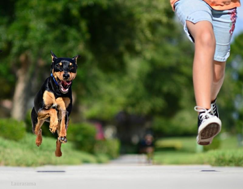 Angst vor Hunden Phobie Haustiere Hunderassen