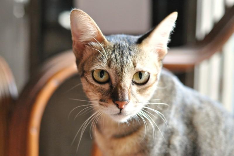 Angst vor Katzen überwinden Haustiere Tipps
