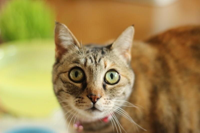 Angst vor Katzen Haustiere Tipps Hauskatze