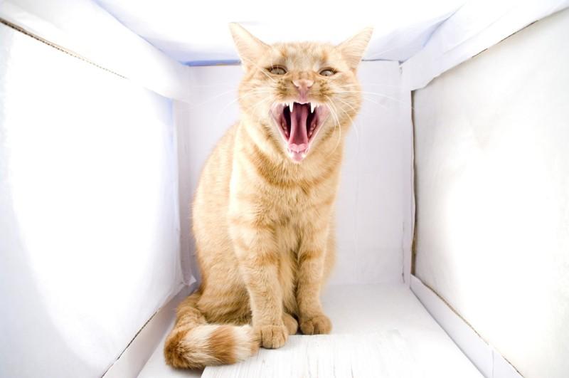 Angst vor Katzen Haustiere Tipps gefährliche Hauskatzen