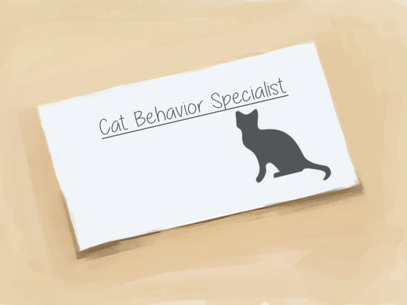 Angst vor Katzen Haustiere Tipps professionelle Hilfe