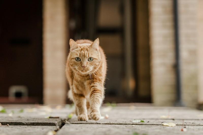 Angst vor Katzen Haustiere sind Katzen gefährlich