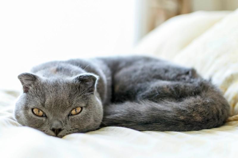 Angst vor Katzen Haustiere und Kinder