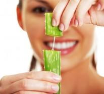 Aloe Vera Pflanze in der Medizin und Kosmetik