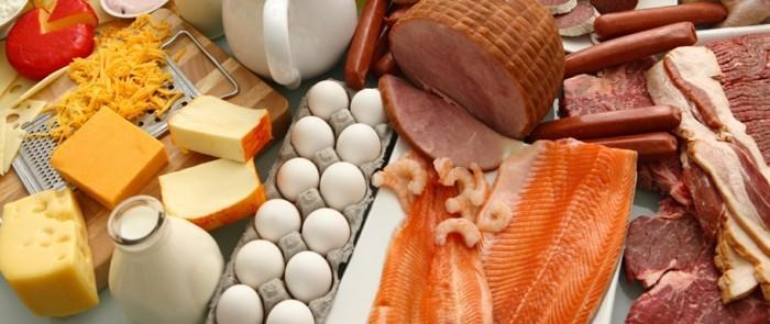 eiweiß diet lebe gesund proteine