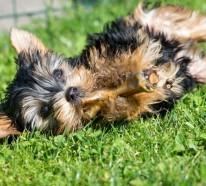 Den ersten Hundegeburtstag feiern – Spaß für die ganze Familie