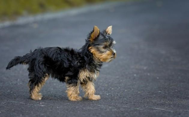 ersten-Hundegeburtstag-feiern-Hunderassen-Haustiere