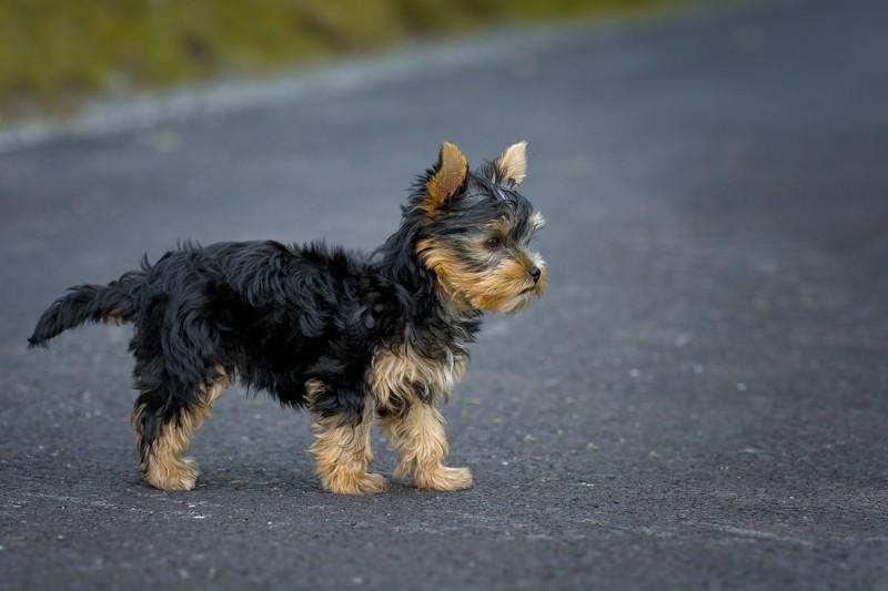 ersten Hundegeburtstag feiern Hunderassen Haustiere