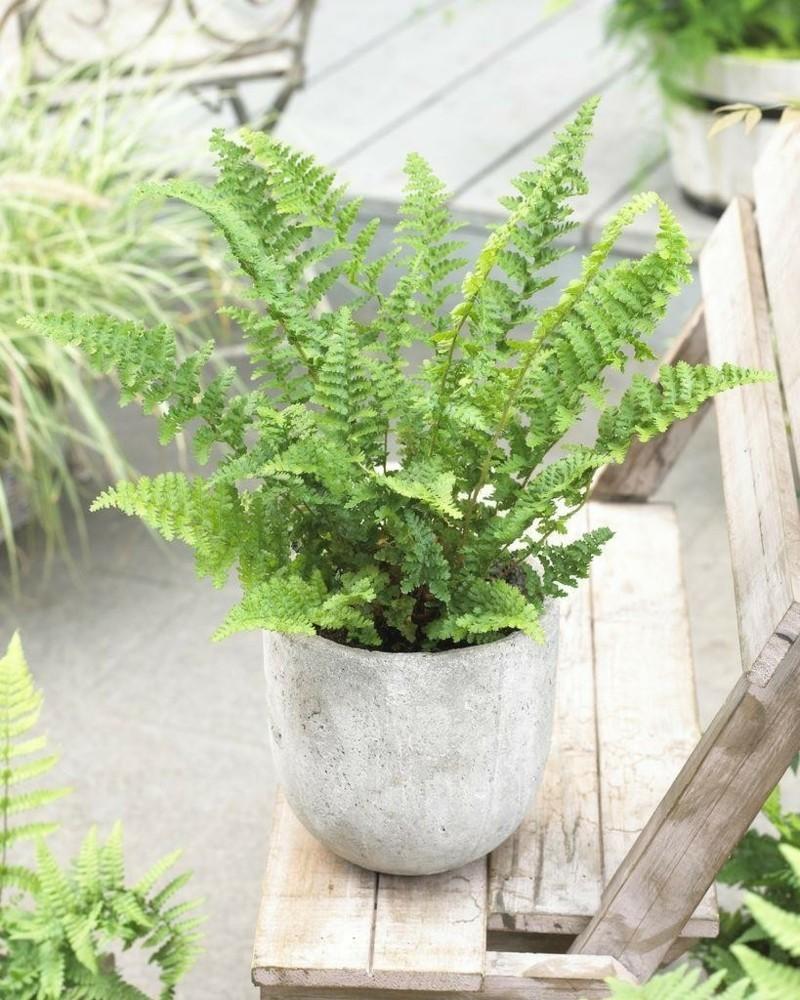 Giftige zimmerpflanzen 20 giftpflanzen die sie kennen sollen - Giftige zimmerpflanzen ...