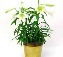Giftige Zimmerpflanzen – 20 Giftpflanzen, die Sie kennen sollen