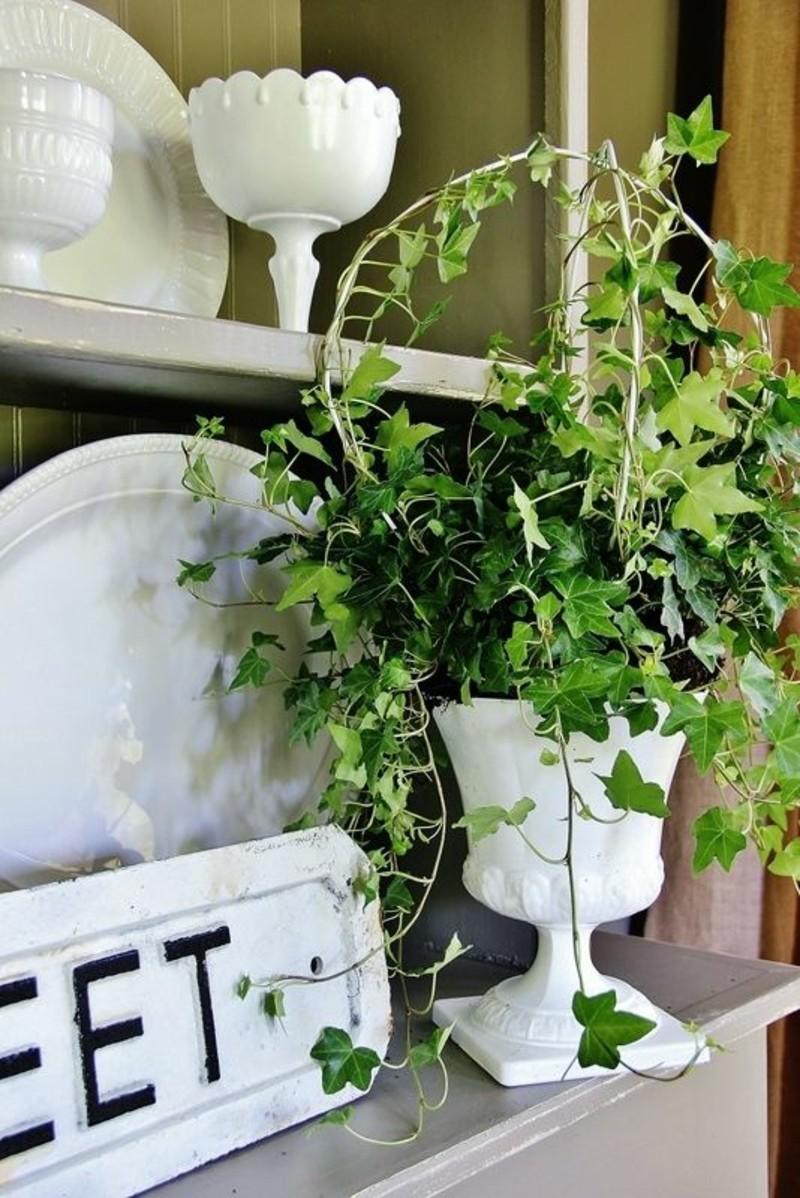 giftige zimmerpflanzen 20 giftpflanzen die sie kennen. Black Bedroom Furniture Sets. Home Design Ideas