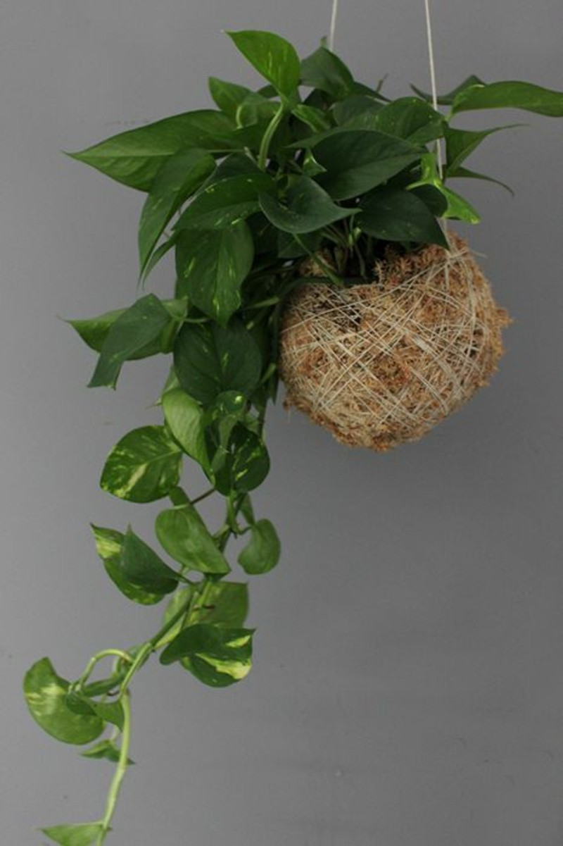 giftige zimmerpflanzen 20 giftpflanzen die sie kennen sollen. Black Bedroom Furniture Sets. Home Design Ideas