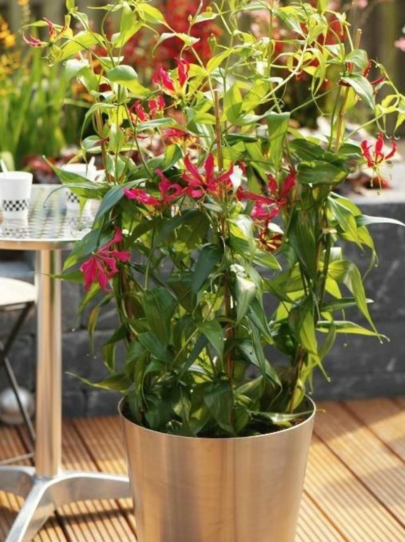 Giftige zimmerpflanzen 20 giftpflanzen die sie kennen for Originelle zimmerpflanzen