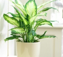 giftige zimmerpflanzen 20 giftpflanzen die sie kennen sollen